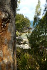 bermuda's rocky coast 2