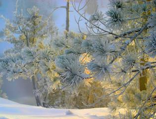 golden light and hoar frost