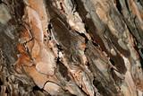 wooden bark poster