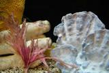 inside aquarium poster