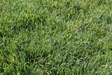 grass,lawn,green poster