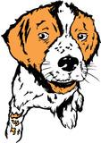 dog / puppy illustration - english springer poster