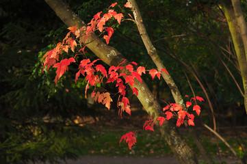 fall tree 4