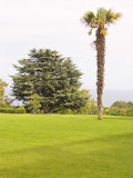 palma on a lawn poster