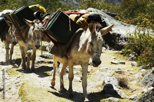 expedition donkey