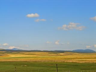 summer landscape meadow