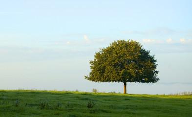 comme un arbre