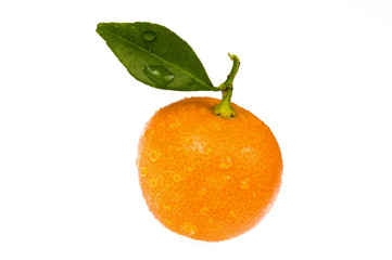 sweet orange fruit. calamondin on white