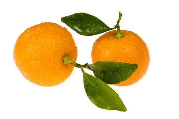 sweet orange fruits - calamondins