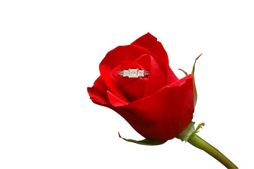 red rose with diamond ring 2