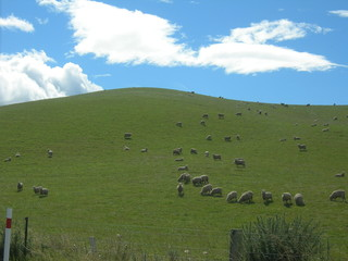 windows xp background + lambs