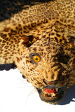 leopard skin rug 1 poster