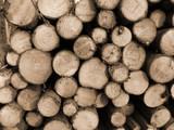 cut timber poster