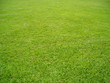 plain green field