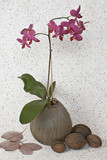 still life with coconuts and orchids poster