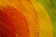 Leinwandbild Motiv autumn leaf palette