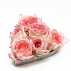 'lovely' italian roses