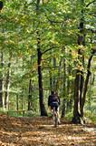 cycliste en forêt poster