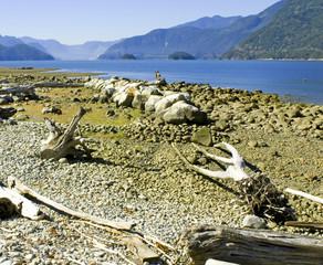 furry lake, vancouver 2