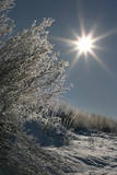 winter scenery with sun poster