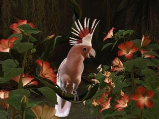 inka kakadu