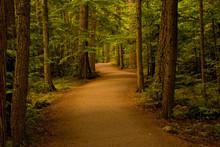 "Постер, картина, фотообои ""path in the forest/woods"""