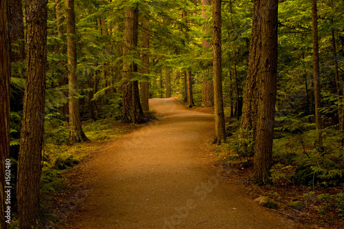 path in the forest/woods