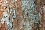 brown bark of a tree poster