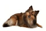 dog portrait poster