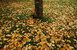 autumn leaves falling to the ground poster