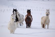 pferde im  winter 3