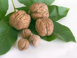 big and small walnuts on walnut leaves poster