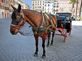 horse coach in rome poster