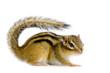ecureuil - chipmunk ou écureuils d'eurasie