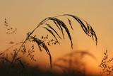 romantic sundown poster