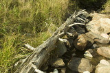 dead tree in acadia poster