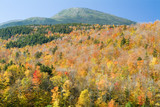 fall trees and mount washington poster
