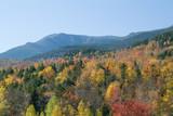 fall foliage near mount washington poster