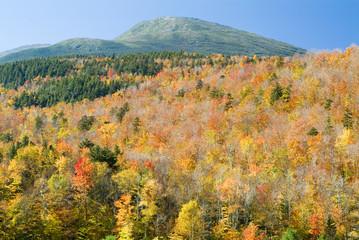 fall trees and mount washington