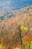 fire burned birch tree on mountain slope poster