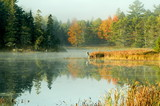 misty fog over small pond and fall trees poster