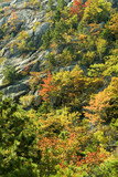 mountainside view of peak fall foliage in acadia poster