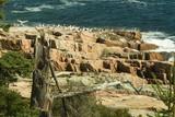 pink granite cliffs of acadia national park poster