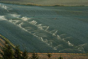 oregon irrigation