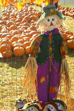 scarecrow pumpkin patch poster
