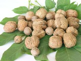 walnuts on the walnut green leaves poster