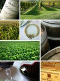 Fototapeta vin