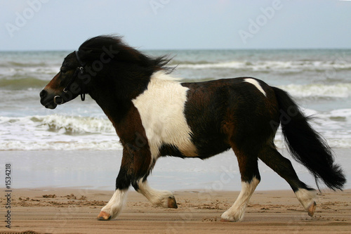 trot on the beach