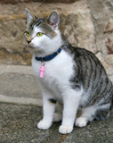 cat with collar poster