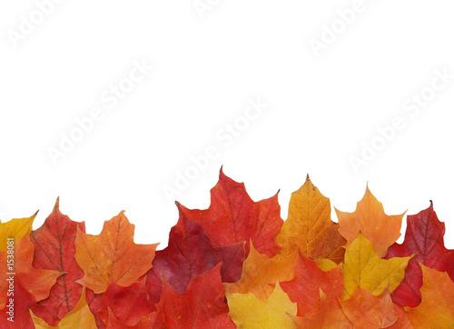 Fotobehang Bomen fall leaf border